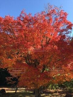 色づく葉の写真・画像素材[3742048]