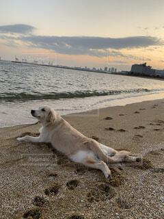 砂浜に横たわる犬の写真・画像素材[3742357]