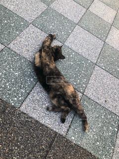歩道で伸びる猫の写真・画像素材[3747057]