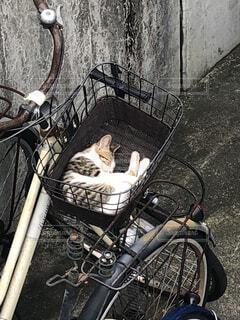 自転車の籠で眠る猫の写真・画像素材[3747063]