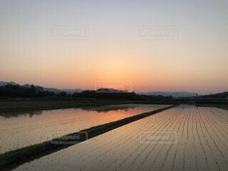 田に沈む夕日の写真・画像素材[3747354]