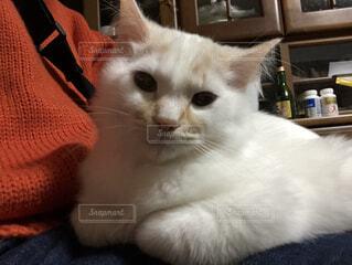 座っている猫の写真・画像素材[3747418]