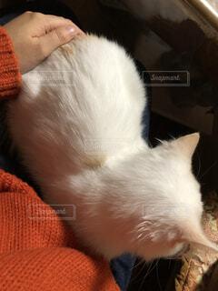 膝の上で寛ぐネコの写真・画像素材[3747420]
