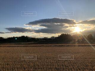 稲の散歩道の写真・画像素材[3747422]
