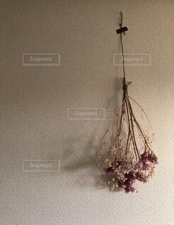壁に吊るされた花の写真・画像素材[3747426]