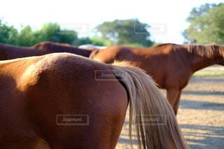 馬のお尻の写真・画像素材[3833320]