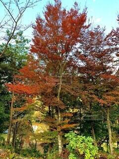 紅葉シーズンの写真・画像素材[3869292]