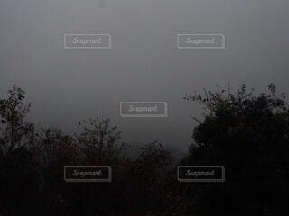 濃霧の写真・画像素材[3969310]