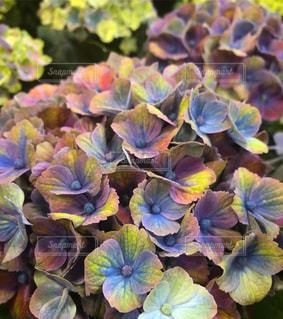 花のクローズアップの写真・画像素材[2114876]