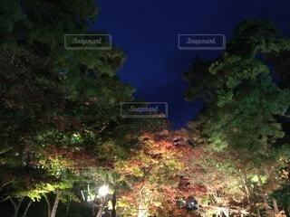 森の中の木の写真・画像素材[3743351]