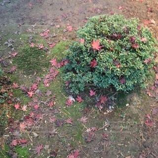 花園のクローズアップの写真・画像素材[3743353]