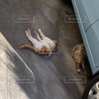 猫の写真・画像素材[3743460]