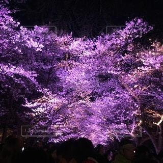 桜の写真・画像素材[3743488]