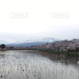 桜並木と山の写真・画像素材[3743490]