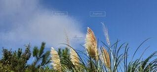 秋の空の写真・画像素材[3749108]