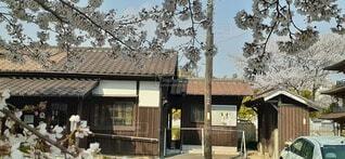 桜の写真・画像素材[3751720]