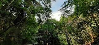 森の中の木の写真・画像素材[3753668]