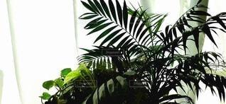 観葉植物の写真・画像素材[3753856]