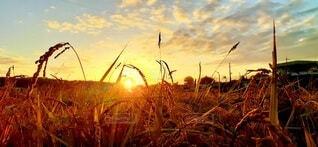 秋色の夜明けの写真・画像素材[3769144]