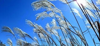 植物のクローズアップの写真・画像素材[3812098]
