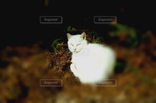 猫の写真・画像素材[3854716]