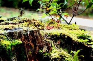 苔の写真・画像素材[3854721]