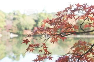 修法ヶ池の写真・画像素材[3854719]