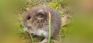 草の中の小さな動物の写真・画像素材[3915042]