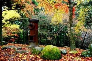 森の真ん中に座っている時計の写真・画像素材[3915071]