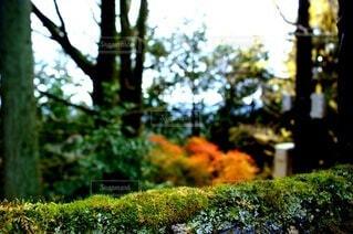 森の中の木の写真・画像素材[3915072]