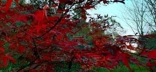 クリスマスっぽいカラーの写真・画像素材[3929001]