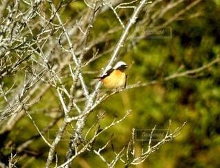 木の枝に止まっている小鳥の写真・画像素材[4062363]