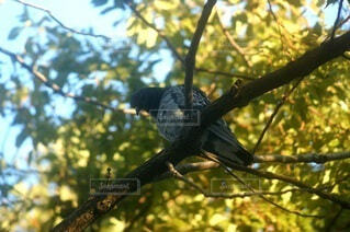 木の枝に止まっている鳥の写真・画像素材[4108081]
