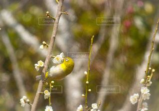 枝に座っている鳥の写真・画像素材[4236321]