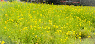 草で覆われた畑の上に座っている花瓶の写真・画像素材[4289450]