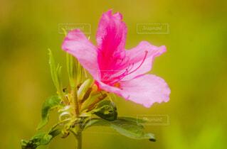 花のクローズアップの写真・画像素材[4329479]