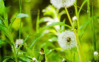 花のクローズアップの写真・画像素材[4383277]