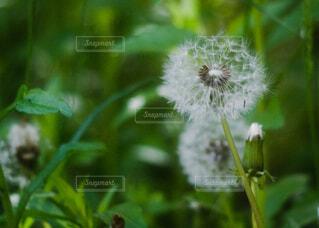 植物のクローズアップの写真・画像素材[4383274]