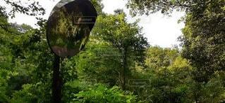 森の中の木の写真・画像素材[4547610]