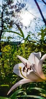 木の枝に花瓶の写真・画像素材[4580132]