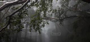 雪に覆われた木の写真・画像素材[4768712]