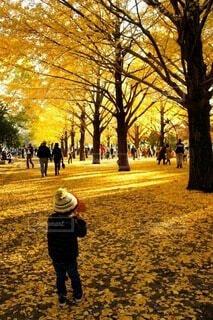公園の写真・画像素材[3793786]