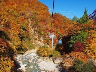 紅葉の中を空中散歩の写真・画像素材[3795260]