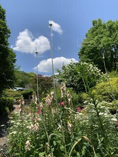 庭の植物の写真・画像素材[3765345]