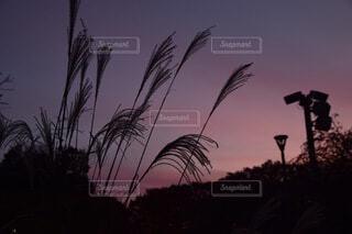 夕焼けの写真・画像素材[3752031]
