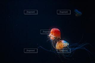 深海の灯りの写真・画像素材[3873721]