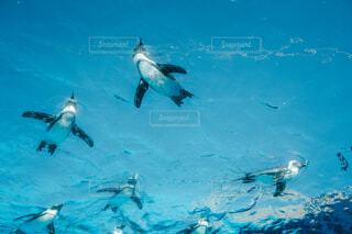 空飛ぶペンギンの写真・画像素材[3873719]
