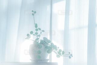 朝のひかりの写真・画像素材[3885912]