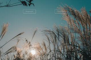 日が傾き始める頃の写真・画像素材[3895569]