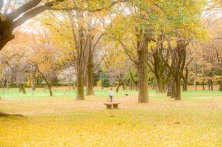 黄金色に囲まれての写真・画像素材[3904972]